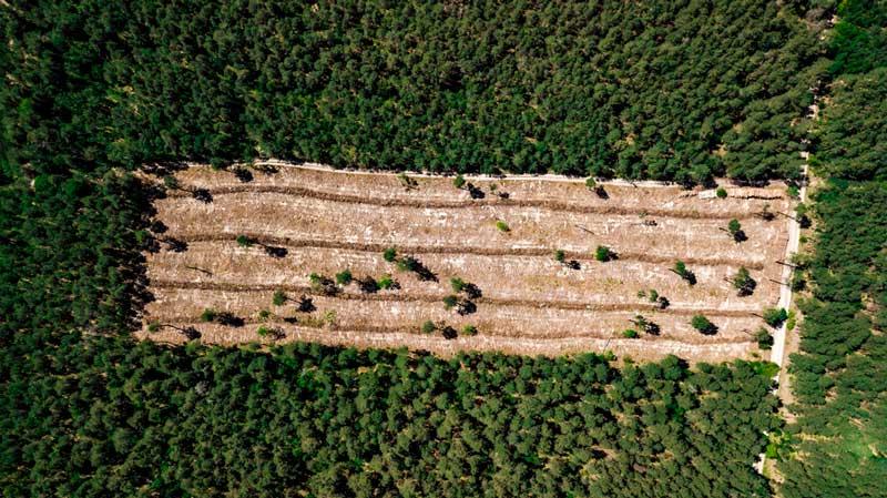 Palmölprodukte und der Regenwald